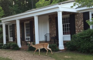 deer at the house